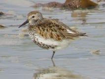 seabird foto de stock