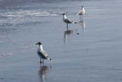 seabird Arkivbild