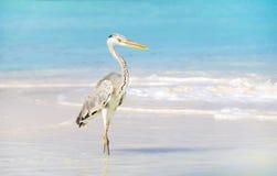 Seabird Stock Photo