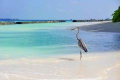 Seabird Stock Photography