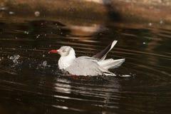 seabird fotografia de stock