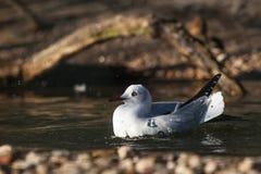 seabird fotos de stock royalty free