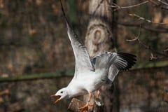 seabird imagem de stock royalty free