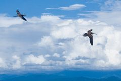 Seabird Stock Photography
