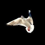seabird Стоковые Фотографии RF