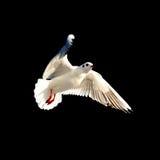 seabird Стоковая Фотография