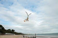 Seabird on the beach in Bournemouth, Dorset, UK. Royalty Free Stock Image
