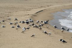 Seabird, Beach, Sand, Shore stock photos