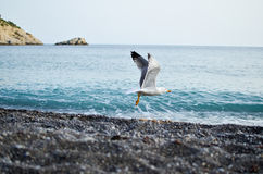 Seabird bierze daleko Zdjęcia Royalty Free