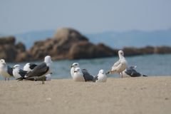 Seabird, Bird, Gull, Fauna stock photos