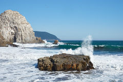 Seabird Colonies on the Coast of Chile Royalty Free Stock Images