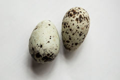 Seabird eggs. Two eggs of Pigeon guillemot & x28;arctic seabird& x29; on the white background. Big eggs with stripes Royalty Free Stock Image