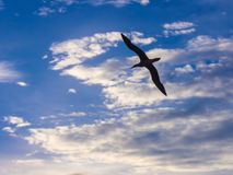 Seabird flying in a cloudy scenery. Above the ocean Royalty Free Stock Image