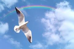 Seabird free. Sea bird fling in the sky Royalty Free Stock Photo