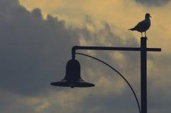 Seabird på ljus Arkivfoton