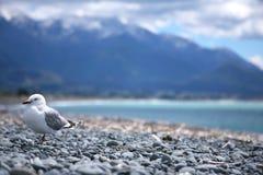 Seabird på stranden Fotografering för Bildbyråer