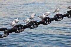 Seabird port obraz royalty free