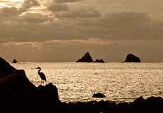 Seabird on rock next to ocean. A seabird is shown in silhouette standing on a rock with the ocean, some islands, and clouds in the background stock photo