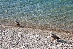 Seabird. Sea birds on the beach Stock Photography