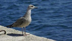 Seabird photo. Sea and seabird Royalty Free Stock Photo