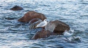 Seabird, Sea, Fauna, Bird stock photography