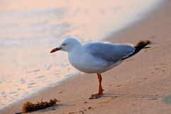 Seabird at sea shore Stock Photo