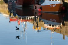 A seabird takes off across the calm water of Padstow Harbour. Against the background of two colourful fishing boats and their reflections stock images
