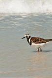Seabird w kipieli obraz royalty free