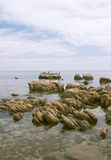 seabirds береговой линии утесистые стоковые изображения