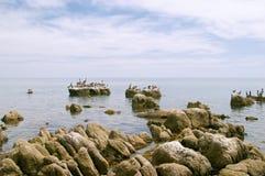 seabirds береговой линии утесистые стоковые изображения rf
