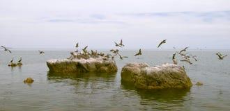 seabirds стаи стоковые фотографии rf