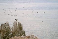 seabirds стаи стоковое изображение