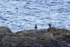 seabirds Lizenzfreie Stockbilder