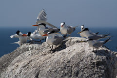 Seabirds Stock Photos