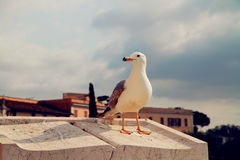 Seabirds Fotografia Royalty Free