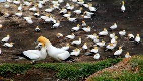 Seabirds royaltyfri foto