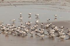 seabirds Fotos de archivo