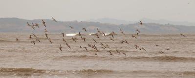 seabirds Fotos de archivo libres de regalías