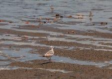 seabirds Imagenes de archivo