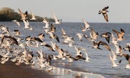 seabirds Fotografía de archivo