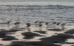 Seabirds obrazy stock