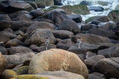 Seabirds Zdjęcie Royalty Free