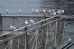 seabirds Photo stock