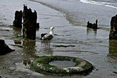 Seabirds Royaltyfri Fotografi