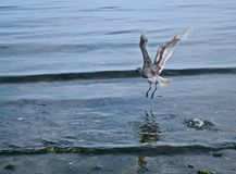 Seabirds Arkivbild