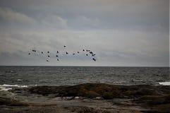 Seabirds Zdjęcie Stock