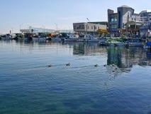 Seabirds in the bay of Sokcho city Stock Photo
