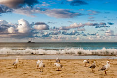 Seabirds on a beach. With a cloudy sky Royalty Free Stock Photos