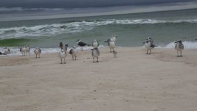Seabirds on beach stock footage