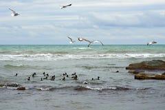 Birds of the Caspian sea. stock photo